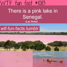 pink lake inSenegal -Lake_Retba ( Lac Rose) MORE OF WTF-FUN-FACTS are coming HERE funny and weird facts ONLY