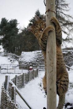 Pole cat !