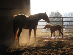 A new filly at my sister's horse farm, Oak Ridge Paints, Williamstown, KY.