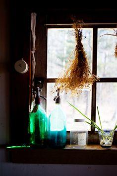 dried flowers in window