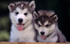 Resultado de imagen para cachorros