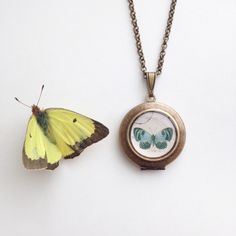 Teal Butterfly Round Locket - Vintage Illustration Brass Locket Necklace - Blue Papillon by Lothirielle on Etsy