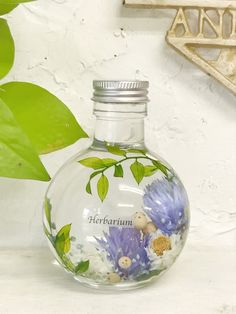 Water Flowers, Diffusers, Botanical Art, Terrarium, Perfume, Branding, Concept, Vase, Candles