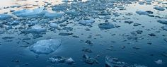 It's clear that the Arctic we know is coming to an end, and that a new and very different Arctic is taking over Ice Ice Baby, Arctic, Community, Outdoor, Outdoors, Outdoor Games, The Great Outdoors