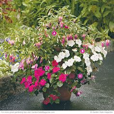 Cool shade container | Garden Gate eNotes Fuchsia and Impatiens