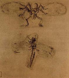 Leonardo da Vinci - Longhorn Beetle and Dragonfly Study - Drawing