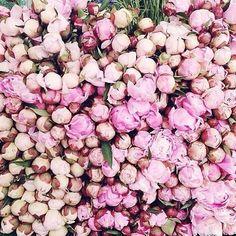 So Pretty! | #flowers #summer #walks