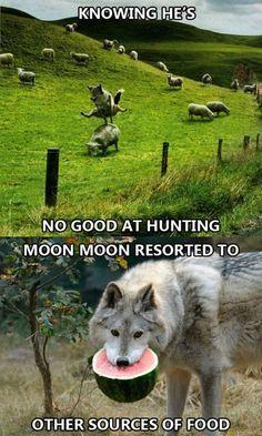 Damn it Moon Moon!