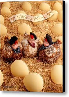 Three French Hens Canvas Print by Anne Geddes. All canvas prints are professionally printed, assembled, and shipped within 3 - 4 business days and delivered ready-to-hang on your wall. Choose from multiple print sizes, border colors, and canvas materials. Baby Kind, Mom And Baby, Baby Love, Anne Geddes, Christmas Wall Art, 12 Days Of Christmas, Twin Baby Photos, Kerala Mural Painting, Bee Photo