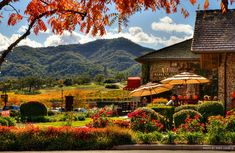 napa+wineries   Wineries, Galleries and Museums Host 30 Days of Art Showings and Wine ...