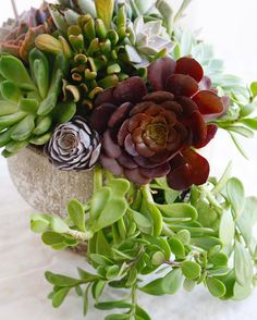 Succulent Sunday!! #succulentsunday | LILLA BELLO Potted Plants, Succulents, Sunday, Instagram Posts, Floral, Heart, Gardens, Pot Plants, Domingo