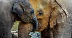 Its okay for parents to nurture, protect, and encourage their children, especially when theyre very young. Elephant mom