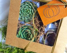 Browse unique items from SucculentTreasures on Etsy, a global marketplace of handmade, vintage and creative goods.