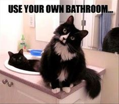 Beware Of Animals With Funny Captions - 28 Pics