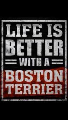 Boston's are Better
