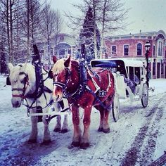 Snow outdoors & Horses & carriage