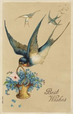 This hub contains images of vintage postcards from my personal collection. Please feel free to use the images in your artistic endeavors. Bluebird Vintage, Vintage Birds, Vintage Ephemera, Vintage Postcards, Vintage Images, Audubon Prints, Paper Illustration, Vintage Scrapbook, Cute Birds