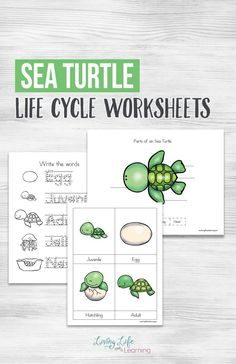 Have fun learning about sea turtles with these adorable sea turtle life cycle worksheets. See the parts of a sea turtle, their life cycle stages and more. - Kids education and learning acts Kindergarten Worksheets, Worksheets For Kids, Sequencing Activities, Ocean Activities, Homeschool Kindergarten, Preschool Printables, Homeschool Curriculum, Printable Worksheets, Homeschooling
