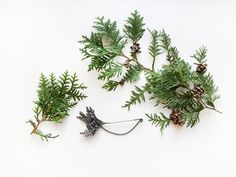 Brooch from our THUJA collection designed by Anna Orska.