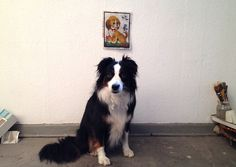 studio dogs by virginhoney, via Flickr