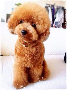 Cocoa♡very very cute