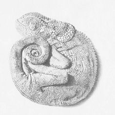 Chameleon_Original Drawing
