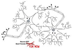 Neuroplasticity: Changing our Belief about Change, by Joanna Holsten