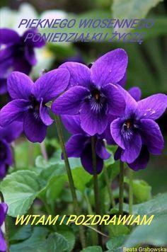 Best Flower Pictures, Flower Pots, Good Morning, Bloom, Purple, Plants, Instagram, Flowers, Polish