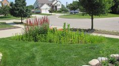 Rain garden year 2 Rain Garden, Year 2, Sidewalk, Gardens, Building, Side Walkway, Outdoor Gardens, Buildings, Walkway