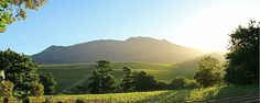 Groot Constantia in Constantia: Wine Estate, Restaurant and Art Gallery, Art South African Wine, Virtual Tour, Tours, History, Cape Town, Travel, Outdoor, Restaurants, Art Gallery