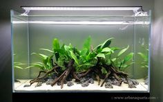 I recently decided to re-scape my 64 litre tank  into an ultra-low maintenance aquascape.   It is based on just sand substrate, rock and woo...