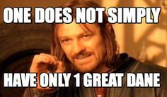 Meme Maker - One does not simply have only 1 great dane Meme Maker!