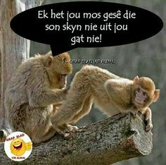 I told you the sun doesn't shine out of your backside. Funny Quotes For Teens, Funny Quotes About Life, Cute Quotes, Work Quotes, Faith Quotes, Funny Animal Pictures, Funny Animals, Afrikaanse Quotes, Teen Humor