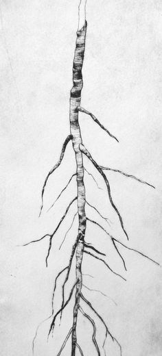 I really love this charcoal drawing. I like how the branch and all of the attached twigs and branches are facing downward. I am also very impressed with the lines and dark spots that create the realistic texture of the tree. The absence of leaves and the white/gray background makes me think of winter.