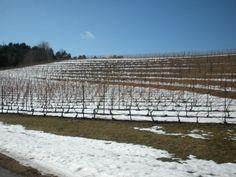 Winter Wine Tasting in Pure Michigan
