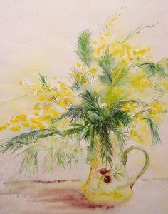 mimosa sauvage