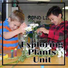 Image result for children learning about plants