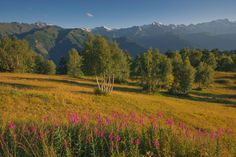 Summer by Soso Meladze on 500px