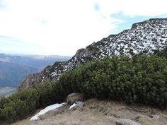 View from Mount Bucegi