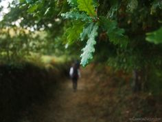 Walking the Camino, heading to Finisterre