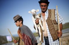 Shepherd Nuno Miguel, 34, holds a lamb as he herds his flock to summer pastures in Serra da Estrela, near Seia, Portugal June 28, 2015. In late June, shepherds young and old in the Seia region of central Portugal start guiding sheep, goats and cattle to the Serra da Estrela, the country�s highest mountains, in search of better pastures. There they stay until the end of September. Modern-day shepherds may have mobile phones to keep in touch with family and friends, but their lifestyle has…