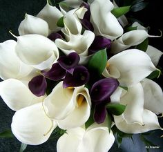 Purple and White Calla Lilies