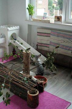 bunny play area