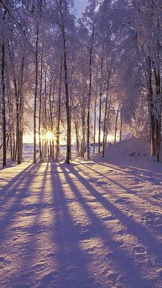 Even if you are not fond of winter, this collection of winter iPhone wallpaper photos will give you more reasons to like this time of the year! Winter Forest, Winter Magic, Winter Love, Winter Snow, Winter Walk, Foto Picture, Beautiful Places, Beautiful Pictures, Amazing Places