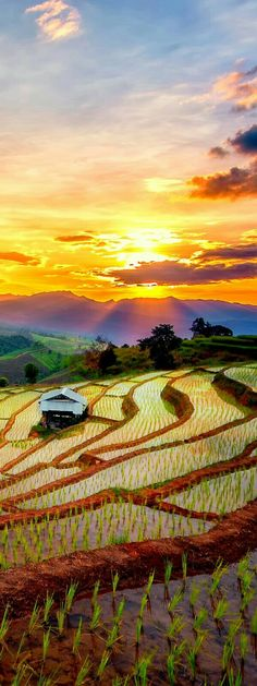 Terraced paddy field in Mae-Jam village, Chiang Mai, Thailand