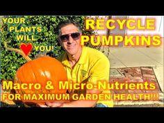 RECYCLE PUMPKINS |  Majority Of MACRO & MICRO-Nutrients Plants Need
