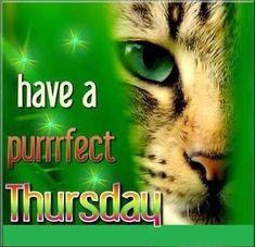 Good Morning Thursday, Morning Cat, Good Morning Funny, Good Morning Messages, Good Morning Quotes, Thursday Humor, Thursday Quotes, Thursday Motivation, Sunday Qoutes