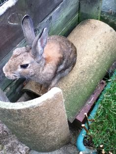 What a beautiful wild bunny rabbit! Hand reared and living a life of luxury now.