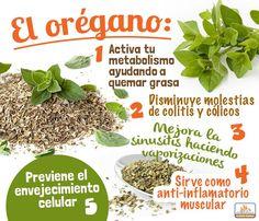 Propiedades y beneficios del Orégano.