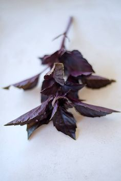 Opal Basil - Pinetree Garden Seeds - Herbs,New for 2015  - 1
